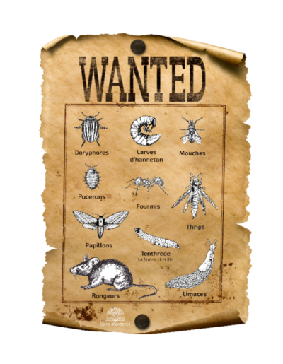 wanted_insectes